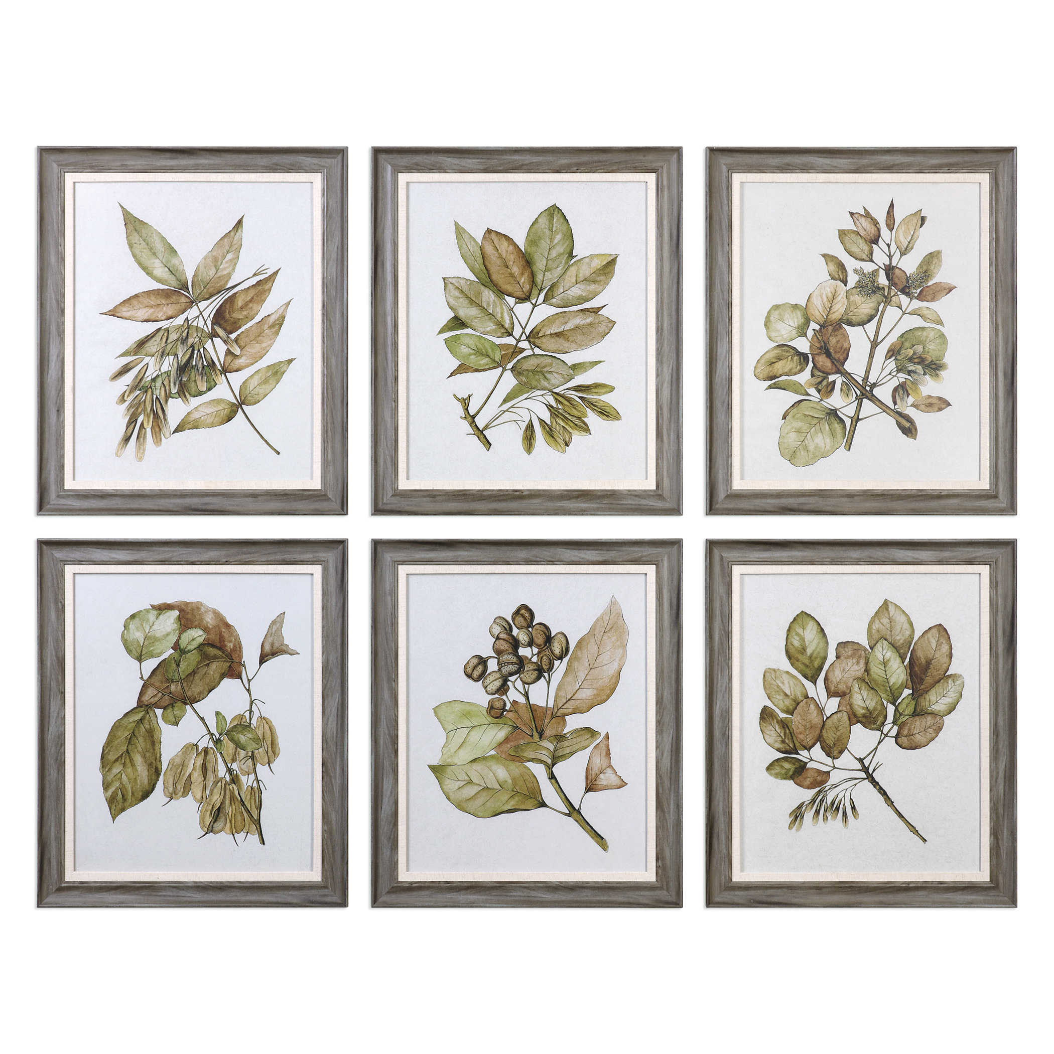 Art Glass Frame Plants Flowers Contemporary Vintage Pretty Chic Classy Uttermost Seedlings Framed Prints Set of 6